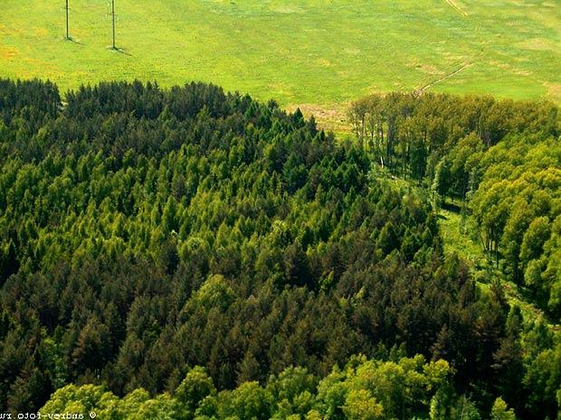 использование смешанных широколиственных лесов: